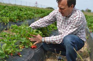 El propietario de Finca Monjarama, donde se cultiva fresa ecológica