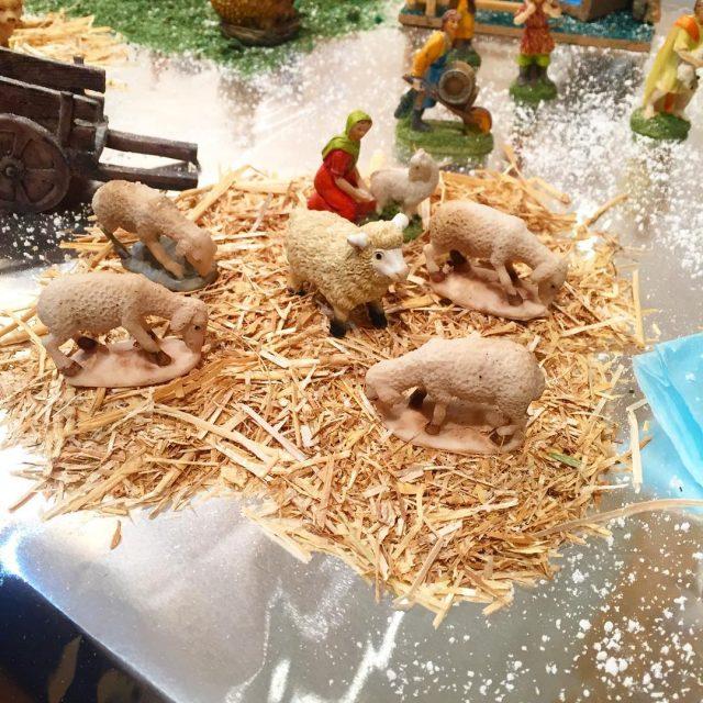 Las ovejas no pueden faltar en nuestro Beln Lo nicohellip